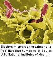 More than 400 illnesses reported in latest salmonella outbreak