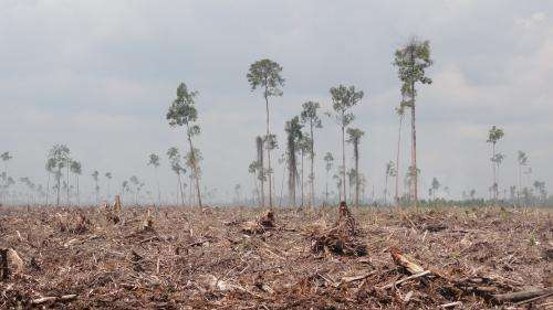 More to conservation than APP's clearing halt