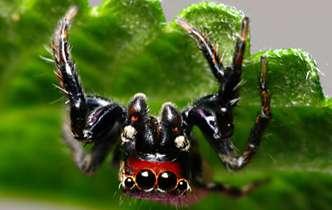 Mosquito terminators and vampire spiders