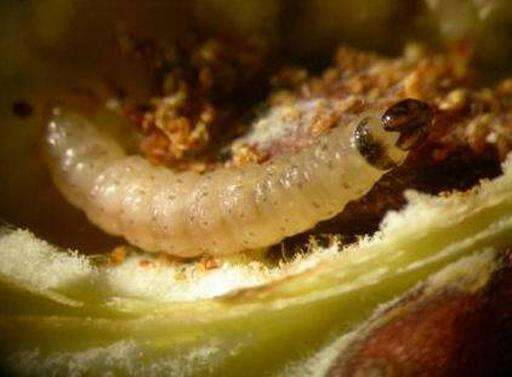 Moth larvae damage textiles by feeding on natural fibres