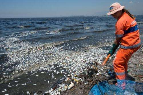 Municipality workers remove thousands of dead fish from the Guanabara Bay near the international airport in Rio de Janeiro, Braz