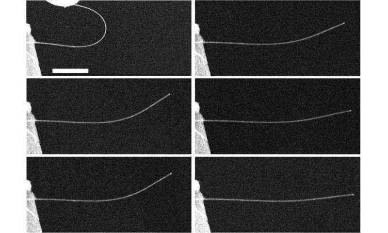 Nanowires highly 'anelastic,' research shows
