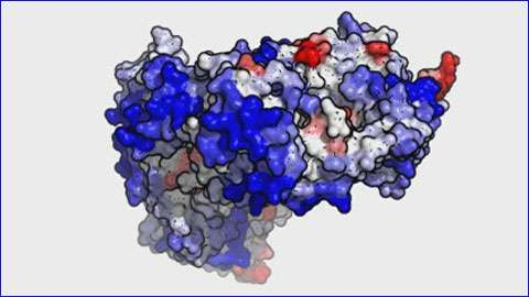 New 3D method improves the study of proteins