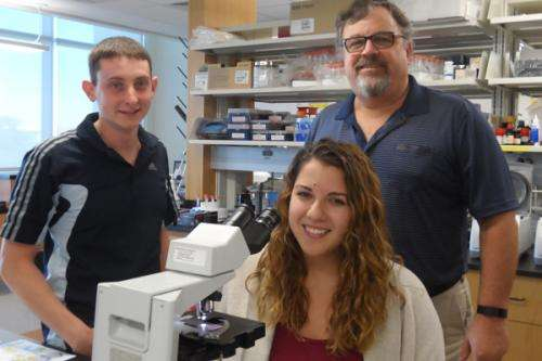 New compounds more potent in combatting brain-eating amoeba's fatal infection