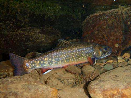 New model identifies eastern stream sections holding wild brook trout