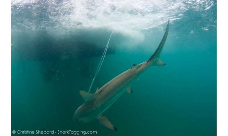 New study suggests angler education can benefit sharks