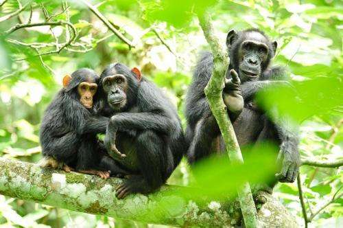 Newton's Laws of Motion model chimp behavior