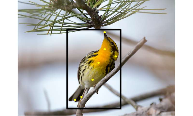 New website can identify birds using photos