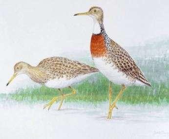New Zealand fossils reveal new bird species