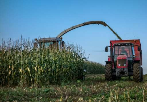 Nineteen of the 28 EU member states have applied to keep genetically modified crops out of all or part of their territory