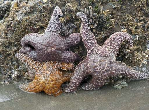 Is Climate Change Killing American Starfish
