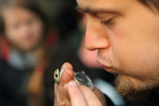 Ornithologist Michal Redlisiak checks the belly of a goldcrest at a remote camp run by bird experts and volunteers near Krynica
