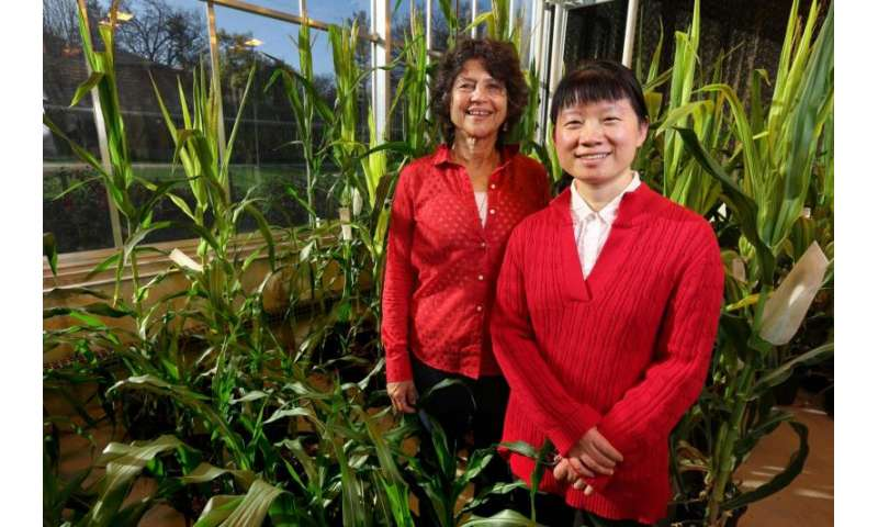 'Orphan gene' may have potential to boost protein value of crops