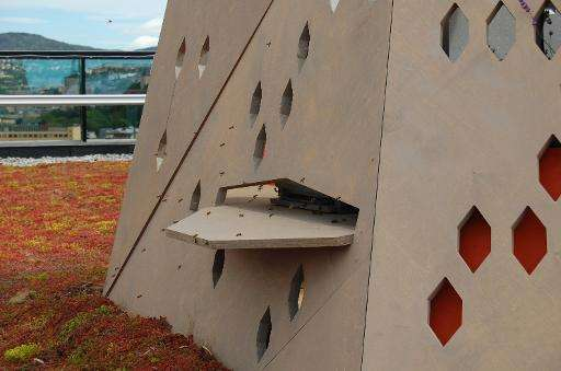 "Oslo's ""bee highway"" aims to give the insects a safe passage through the city, lined with relays providing food an she"