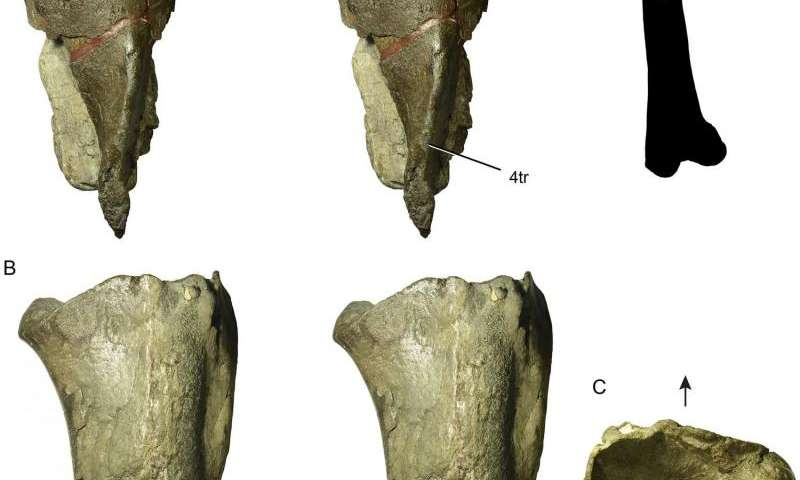 Paleontologists discover the first dinosaur fossil in Washington State