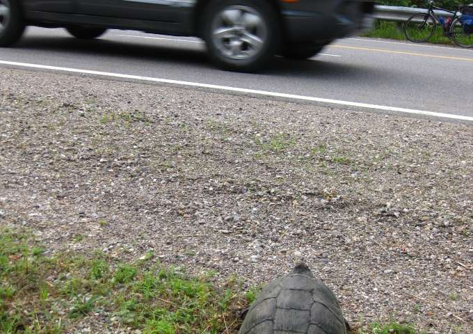 Parkway perilous for at-risk species