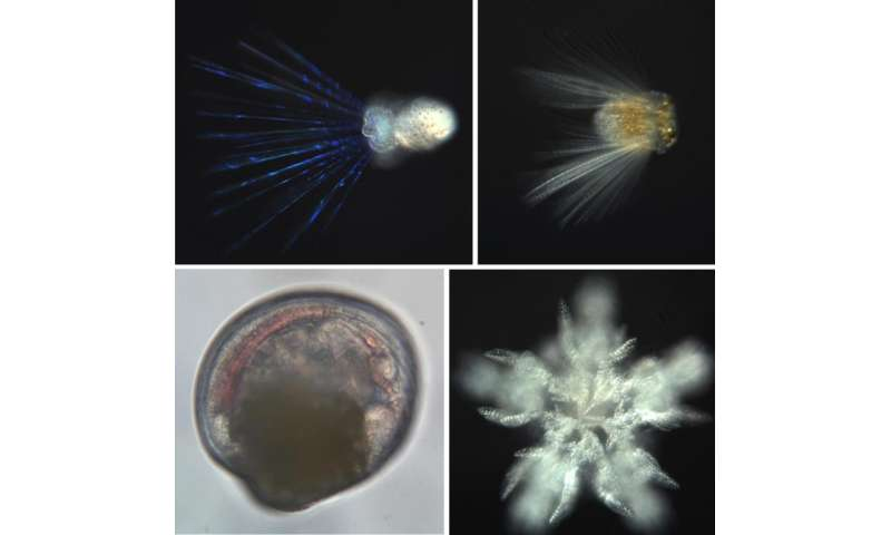 'PlankZooka' larval sampler may revolutionize deep-ocean research