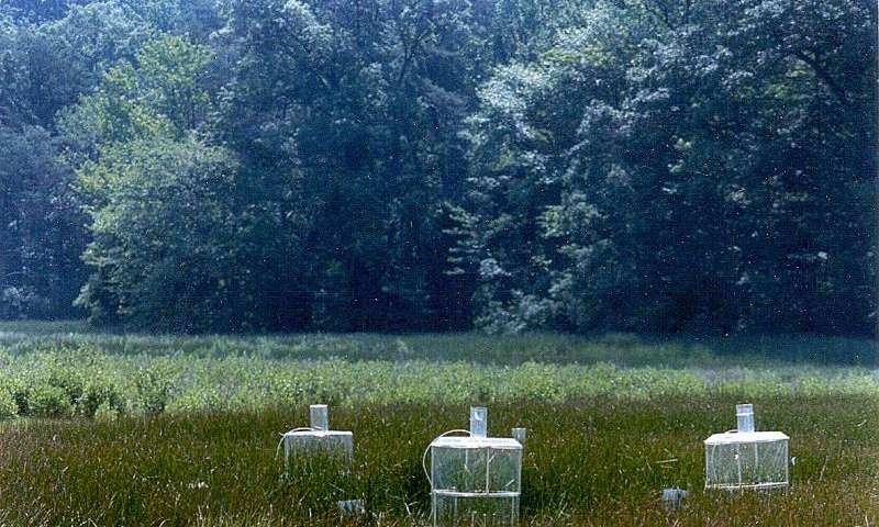 Plant growth enhanced by increased CO2, but food webs give rise to significant variations