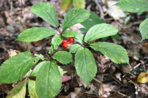 Plant scientist works with landowners, law enforcement to