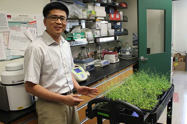 Plant stem cell research may yield bigger, stronger crops