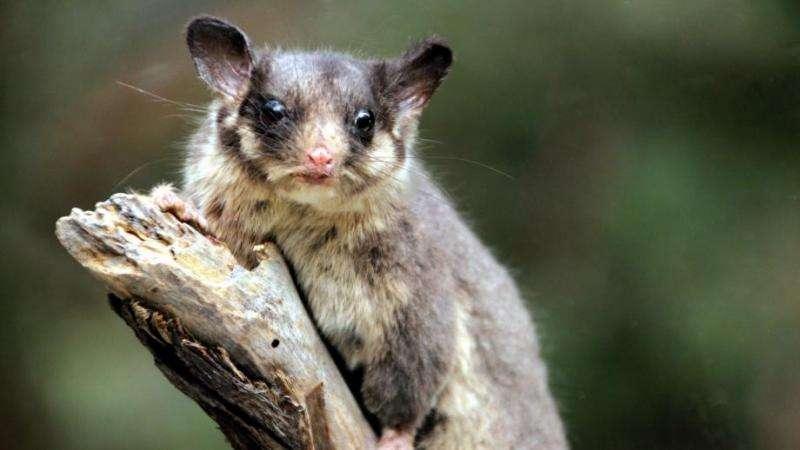 Preventing Australia's biodiversity from collapsing
