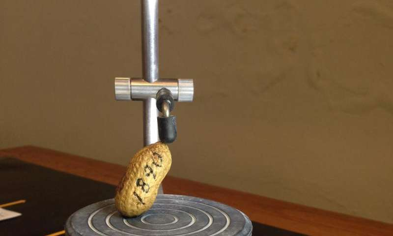 Professor 3-D scans world's oldest ham, peanut