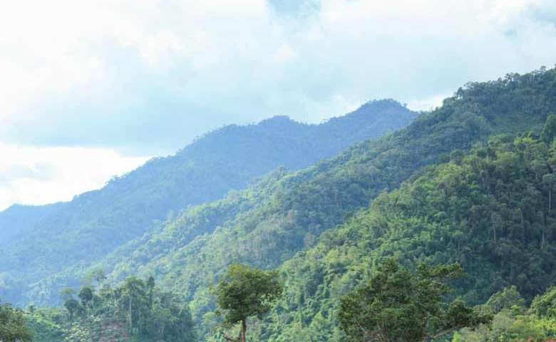 Project shows how fragmentation harms forests' ability to store carbon