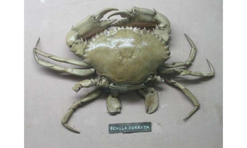Purifying contaminated water with crab shells