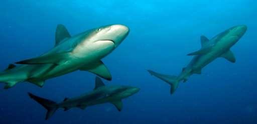 Cuban US Scientists Bond Over Big Sharks