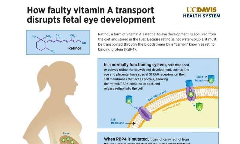 Rare mutation causes vitamin A deficiency and eye deformities