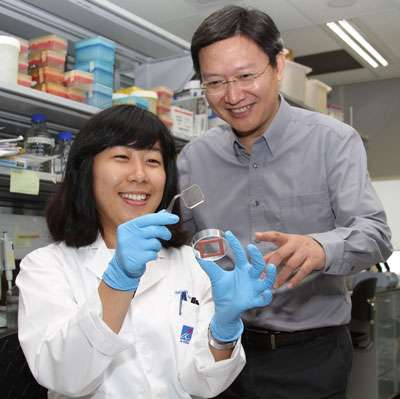 """Recreating embryonic development '""""in a dish""""' to study drugs that cause birth defects"""