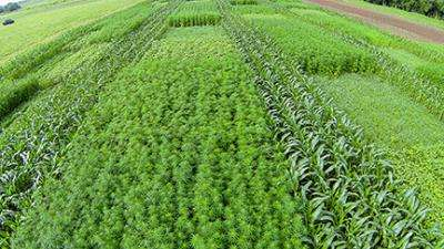 Research on industrial hemp continues to progress