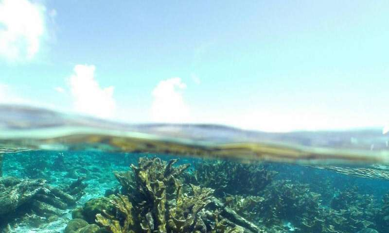 Response to environmental change depends on variation in corals and algae partnerships