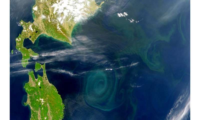 Revealed – the single event that made complex life possible in our oceans