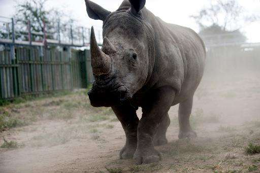 Rhino poaching has hit record levels in South Africa