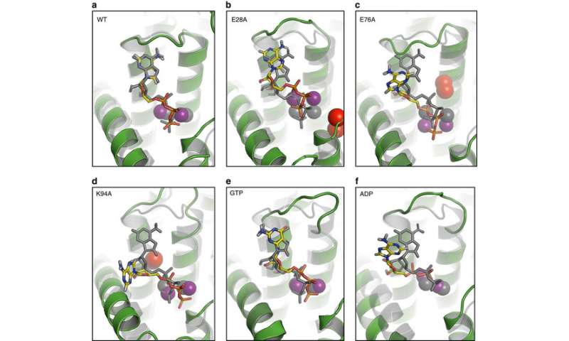 Scientists blueprint tiny cellular 'nanomachine'