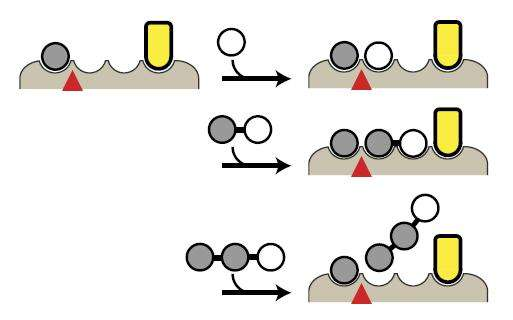 Scientists engineer designer proteins that control enzyme activity