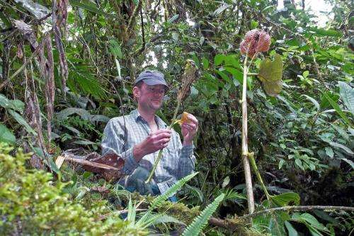 Scientists reveal global patterns of specialized feeding in insect herbivores