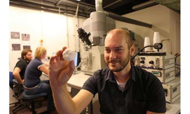Sea urchin spurs new ideas for lightweight materials