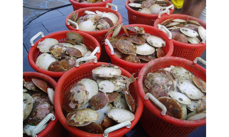 Securing the supply of sea scallops for today and tomorrow