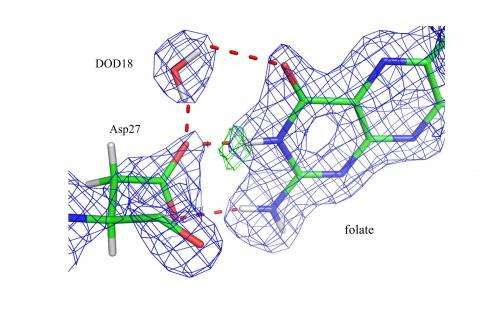 """Seeing"" hydrogen atoms to unveil enzyme catalysis"