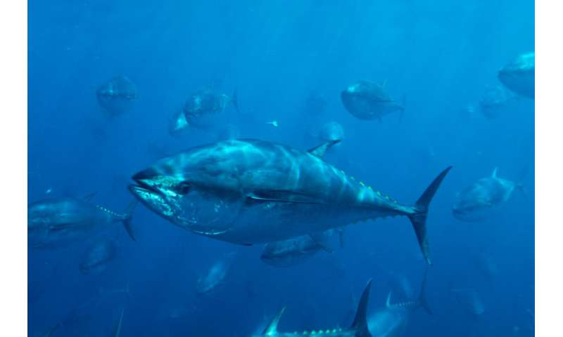 Seeking plans for bluefin recovery and reduced fishing capacity
