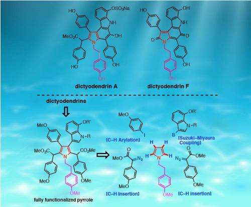Selective functionalization synthesizes chemotherapeutic natural products
