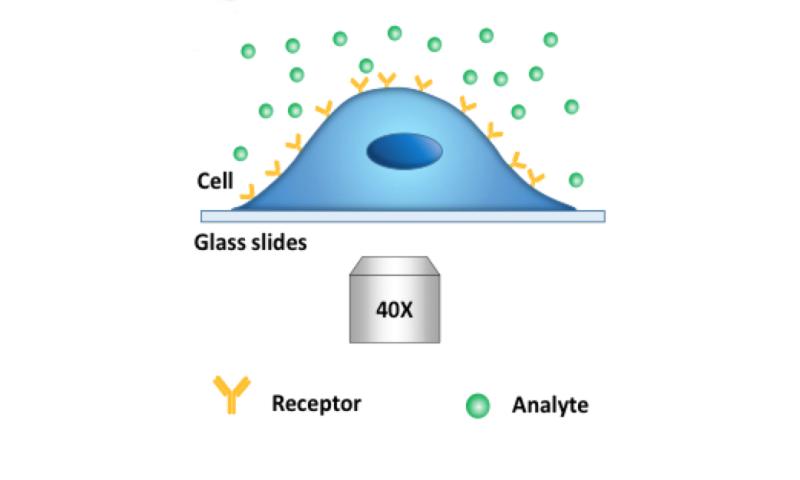 Sensing small molecules may revolutionize drug design
