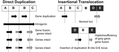 Sequencing genetic duplications could aid clinical interpretation