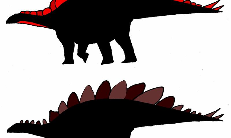 Sexing Stegosaurus
