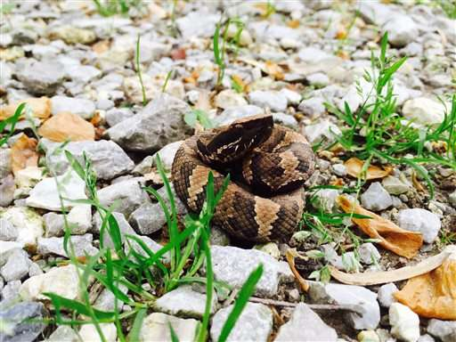 Snake lovers hit southern Illinois for annual migrations