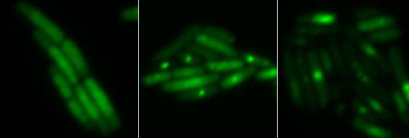 Some antibiotics work by stressing bacteria out (metabolically)