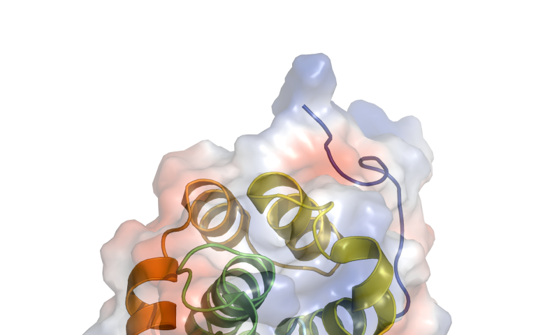 Studies reveal a unified approach to combating several bacterial diseases