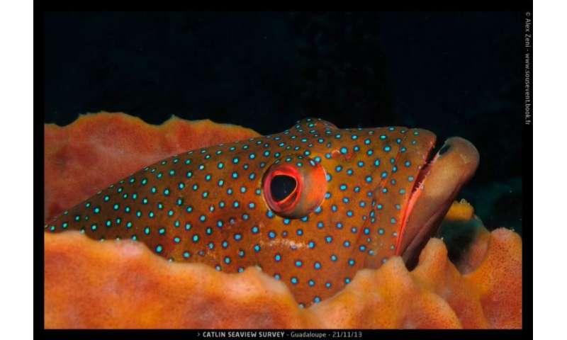 Study: 17K marine species unprotected